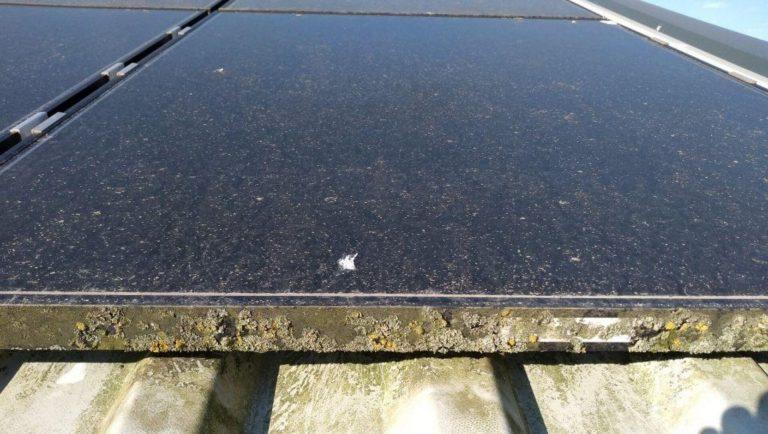 Mos op zonnepanelen Sint-Martens Latem