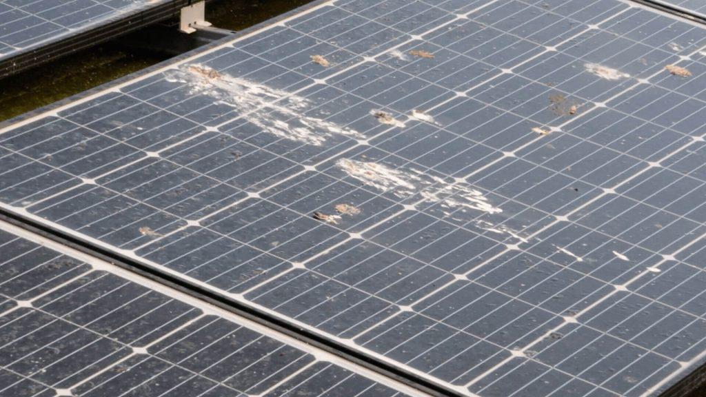 Zonnepanelen laten reinigen Sint-Martens Latem vogelkak